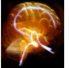 pbs_brain.jpg