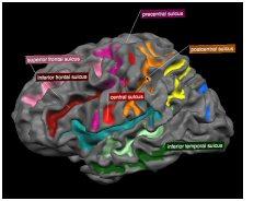 brain_tutor.jpg