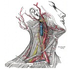 carotid_Gray_image.jpg