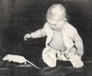 The Little Albert Experiment (Summary)